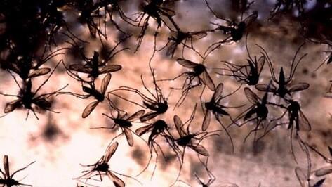 В районе Воронежской области число пострадавших от нашествия комаров детей выросло до 33
