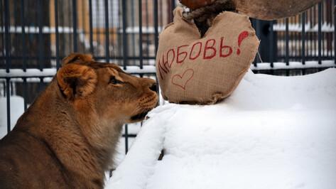 В Воронежском зоопарке питомцам раздали валентинки