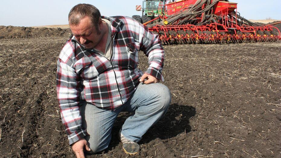 В хозяйствах Ольховатского района начались полевые работы