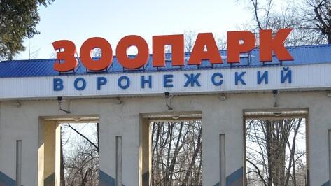 Областной фестиваль «Экоград» пройдет в Воронежском зоопарке