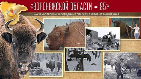 Проект «Воронежской области – 85». Как в Хоперском заповеднике спасали зубров от вымирания