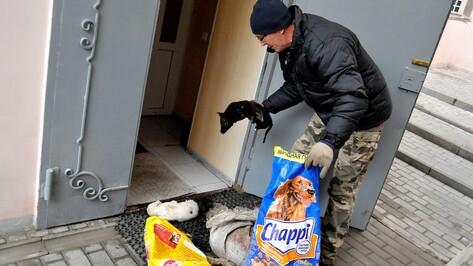 Воронежский зоозащитник добился утилизации мертвых собак из приюта