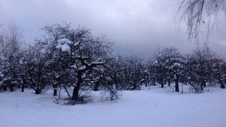 Воронежцы раскритиковали проект застройки яблоневого сада