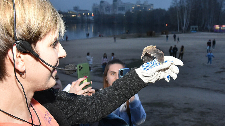 В Воронеже провели «выпускной» летучих мышей
