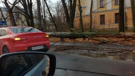 В Воронеже дерево рухнуло на проезжую часть