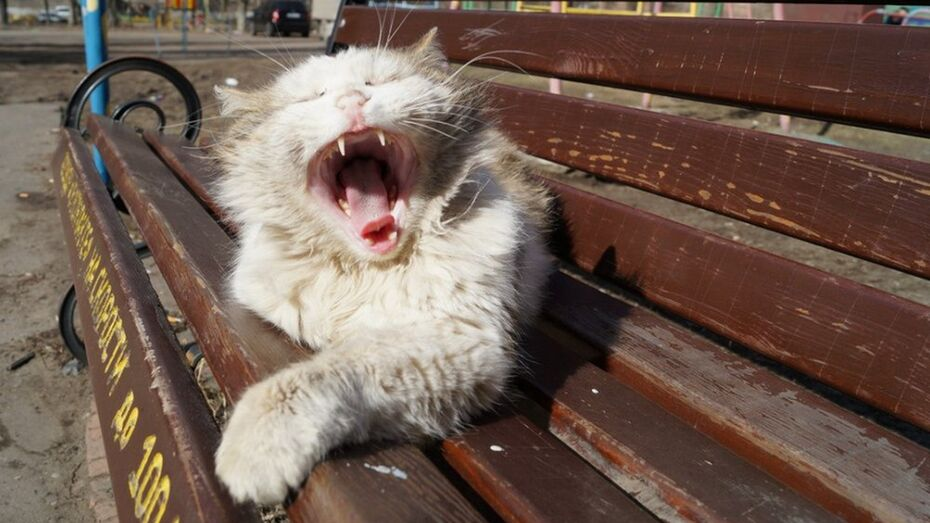 В Нижнедевицке  выявили  случай бешенства бродячей кошки