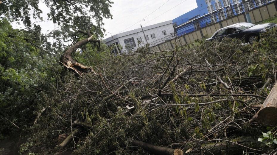 Спасатели предупредили жителей Воронежской области о сильном ветре 12 и 13 октября
