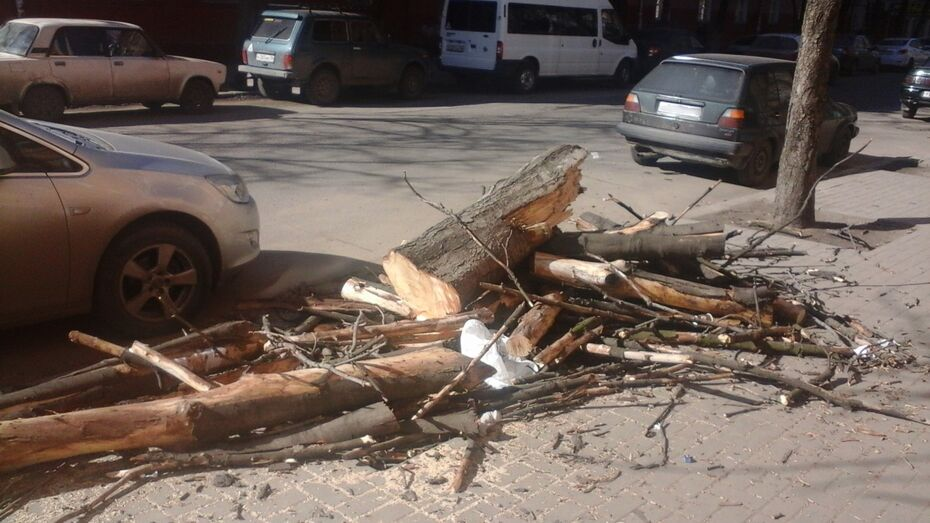 В Воронеже из-за обрезки деревьев перекроют участок улицы в центре города