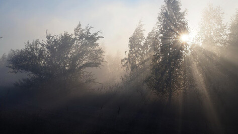 Причиной пожара в заповеднике в Воронежской области назвали учебные стрельбы с вертолета