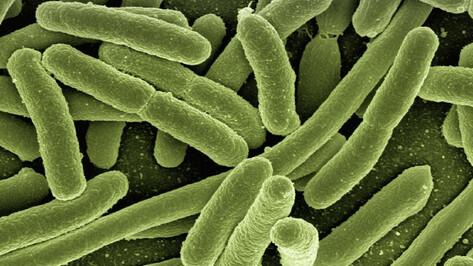 Воронежские ученые разработают новое средство защиты от бактериальных инфекций