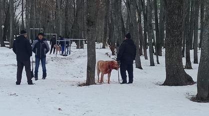 Полиция проверит информацию о собачьих боях под Воронежем