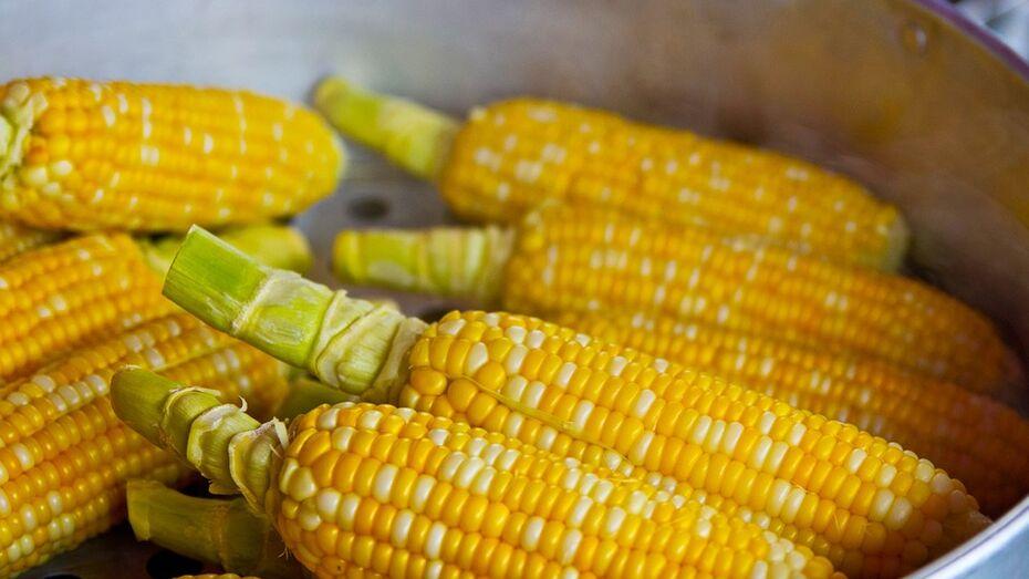 Жителей Воронежской области осудят за продажу семян под марками европейских брендов
