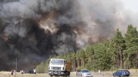 Авиалесоохрана спрогнозировала лесные пожары в Воронежской области в августе