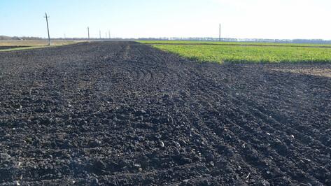 Специалисты воронежского «Продимекса» спрогнозировали непростой агросезон из-за теплой зимы
