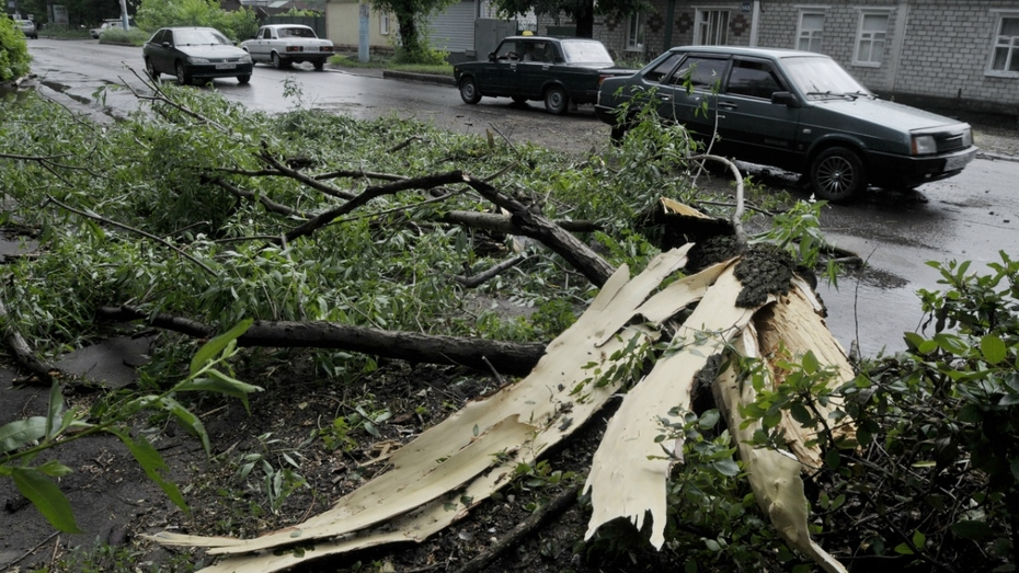 Воронежские спасатели получили 122 заявки об упавших деревьях за 3 дня