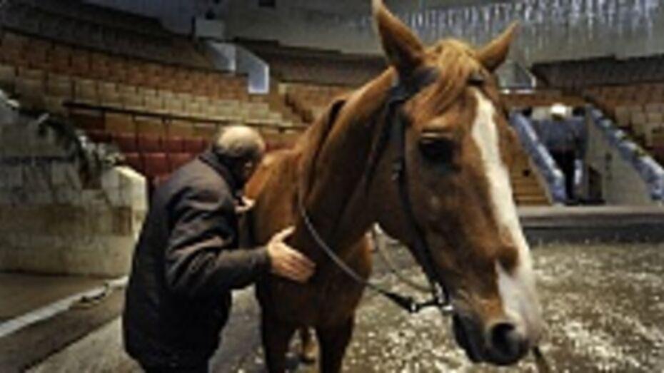 В Воронеже ищут хозяев для циркового коня