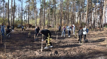 «Хотим спасти зеленую зону». В воронежском Северном лесу посадили 300 берез