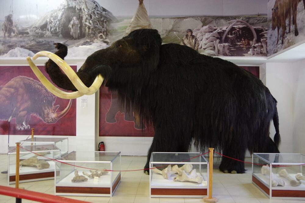 Археологический музей-заповедник «Костенки», Виталий Грасс