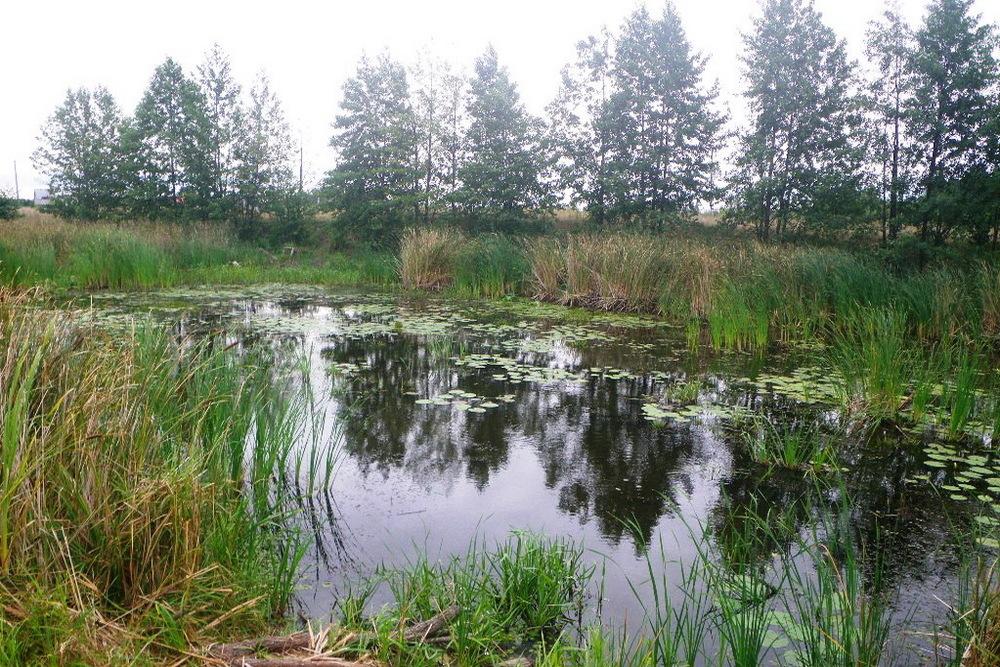 Озера старицы реки в Новой Усмани. Фото – Олег Бобров