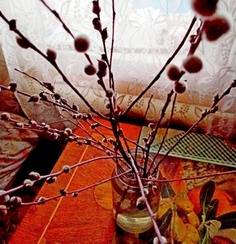 Распустившееся растение обнаружили на берегу реки Карачан.