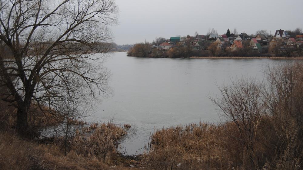Пруд с лотосами стал визитной карточкой Семилукского района