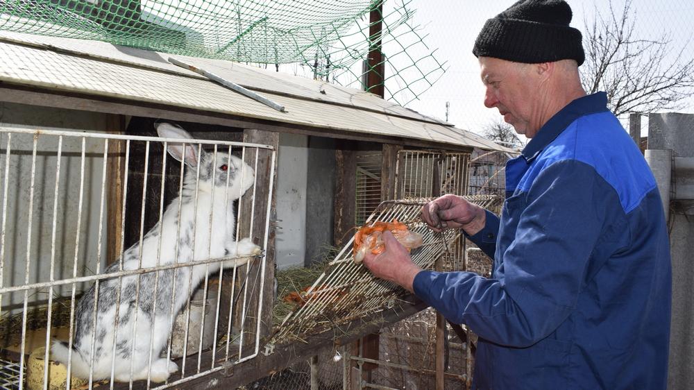 На подворье у борисоглебца остались только два кролика и несколько раненных уток