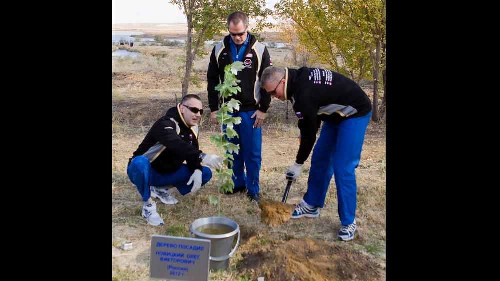 Свое деревоОлег Новицкий посадил в 2012 году
