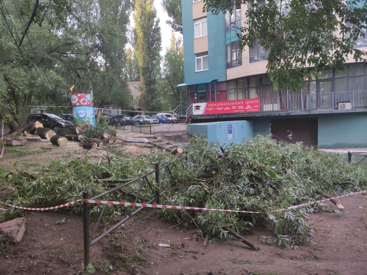 Дерево упало на провода и повалило столб в Воронеже