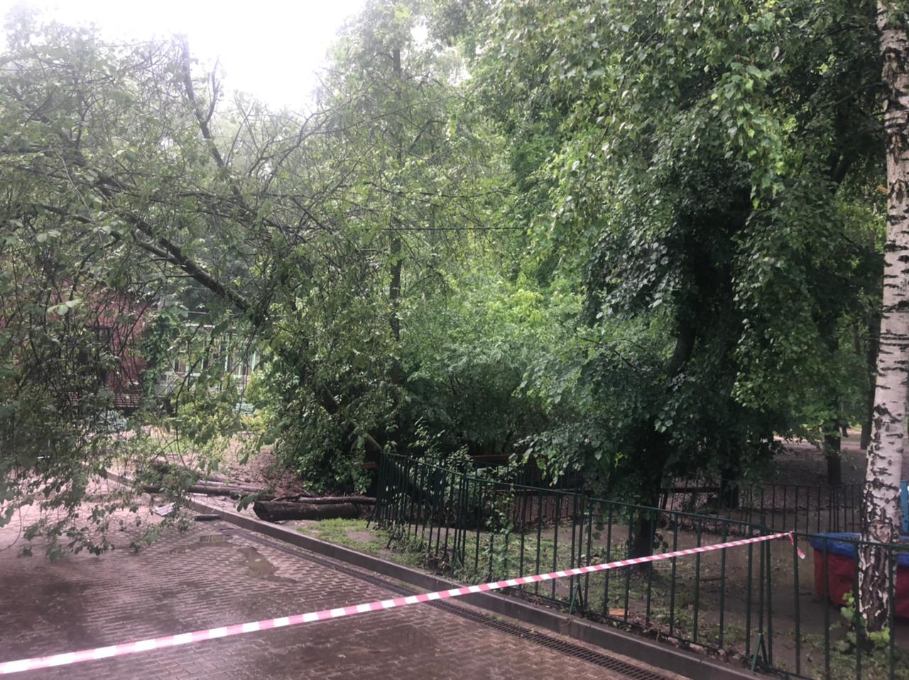 Последствия дождя в Центральном парке Воронежа