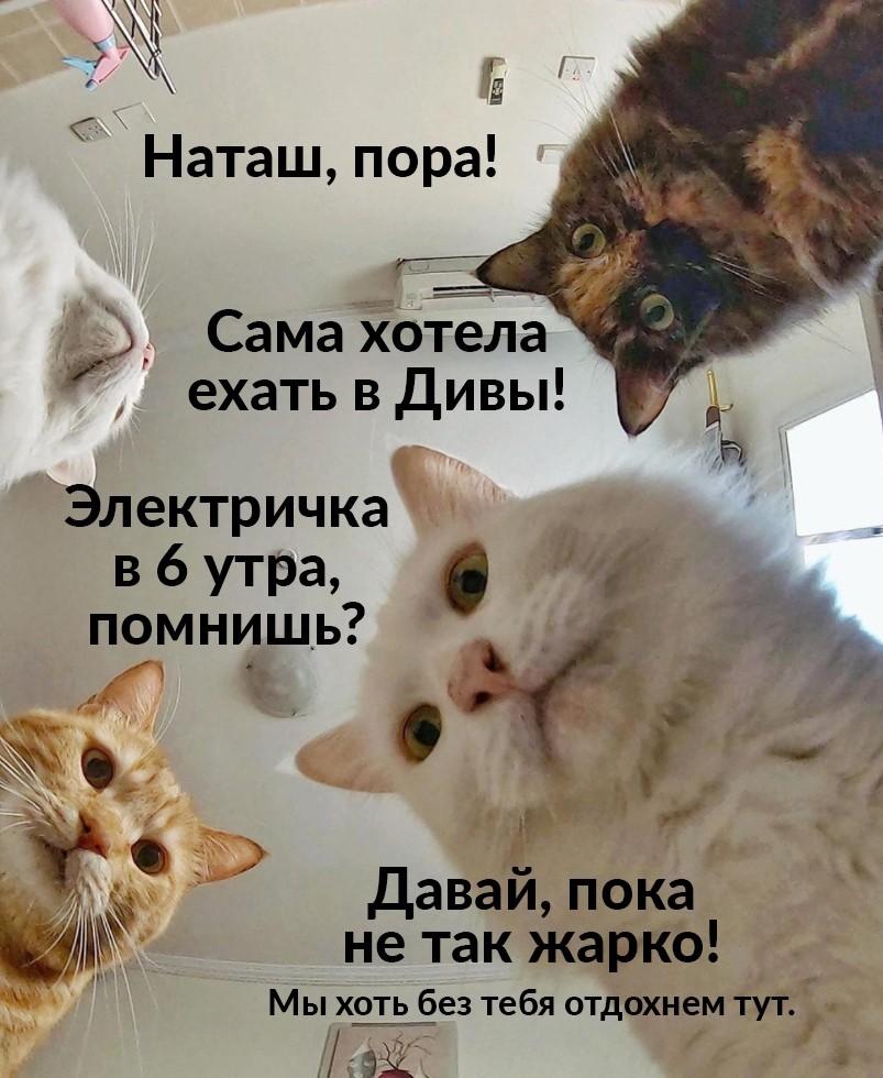 Пример мема от сотрудников музея-заповедника «Дивногорье»