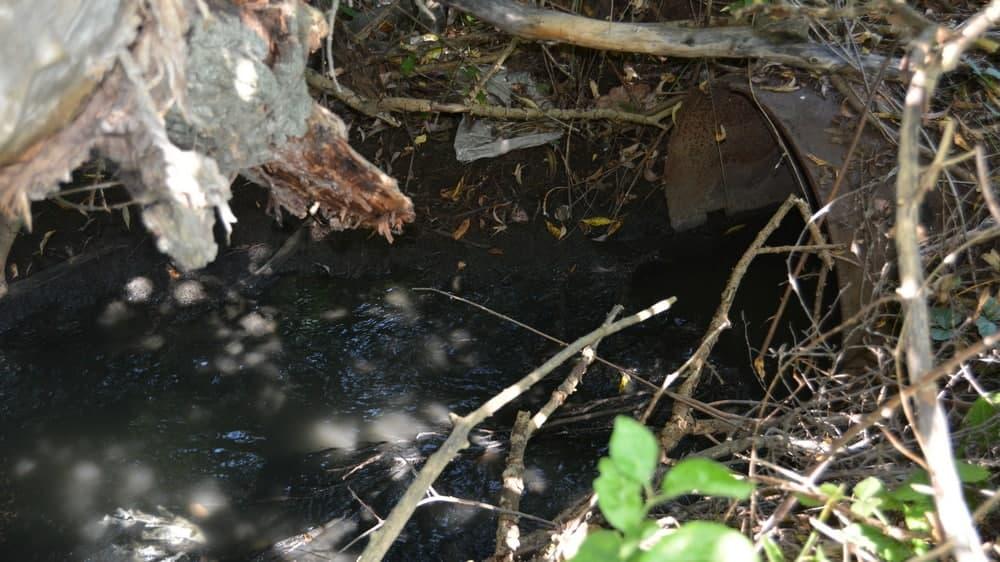 На гибель рыбы пожаловались жители 23 августа