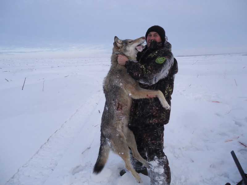 большой волк в ростовской области фото отметить, что