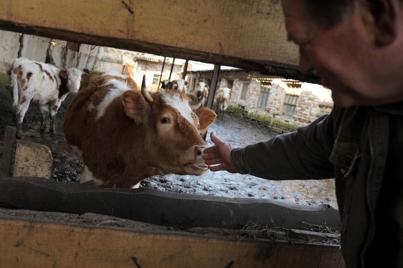 Сколько доплачивает государство при покупки сельхоз животных