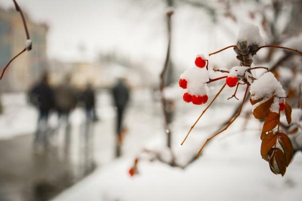 Погода в янгеле иркутской обл