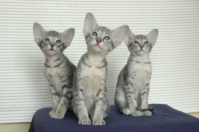 Сходить на выставку кошек DSC_0108.JPG