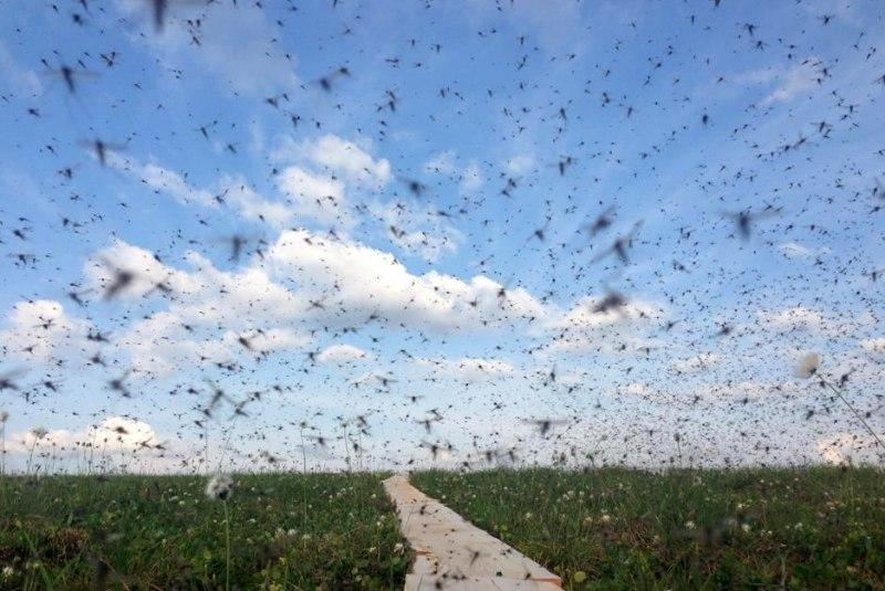 ВВоронежской области России бушует комариный апокалипсис