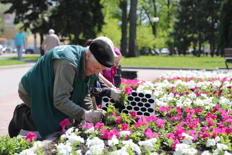 ВВоронеже площадь цветников возрастет на 1 тыс квадратных метров