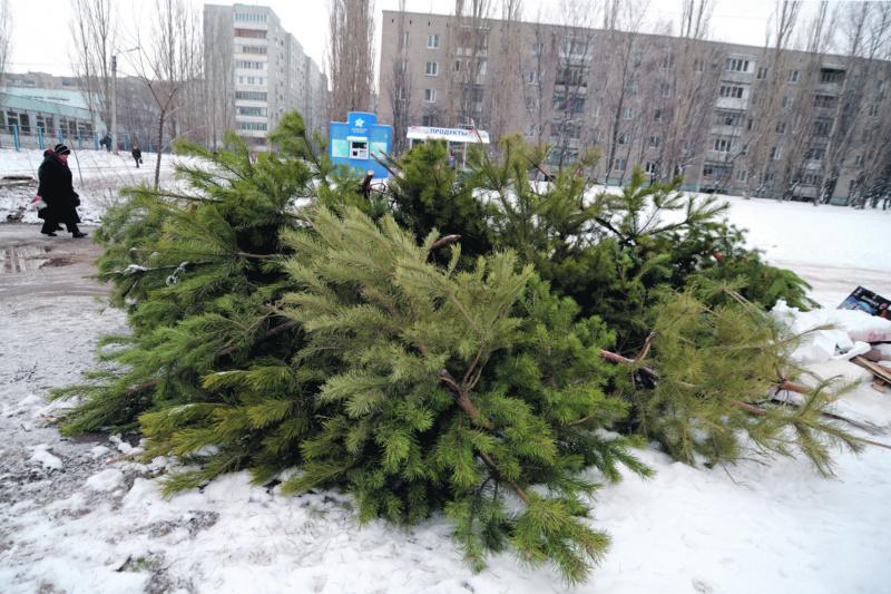 Сдать новогоднюю елку на переработку и получить подарок Yolki_3.JPG