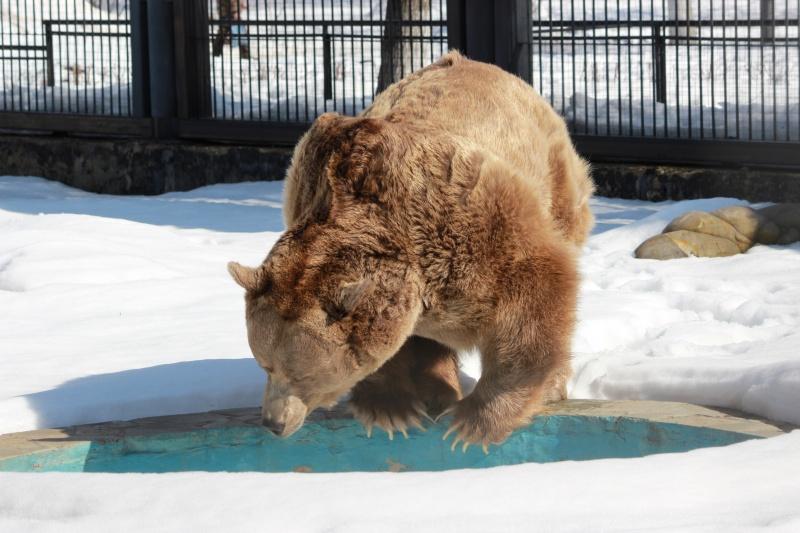 Медведей изВоронежского зоопарка Умку иМашу показали навидео после пробуждения