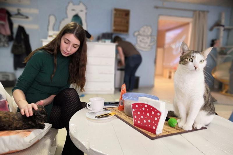 Посмотреть с котиками фильмы про великих музыкантов  .jpg