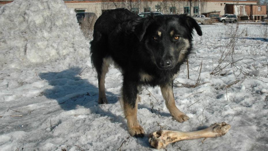 Жителю Павловского района тещин пес едва не откусил нос
