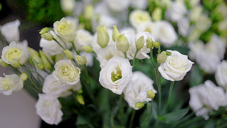 Воронежец похитил букет цветов, чтобы порадовать свою супругу
