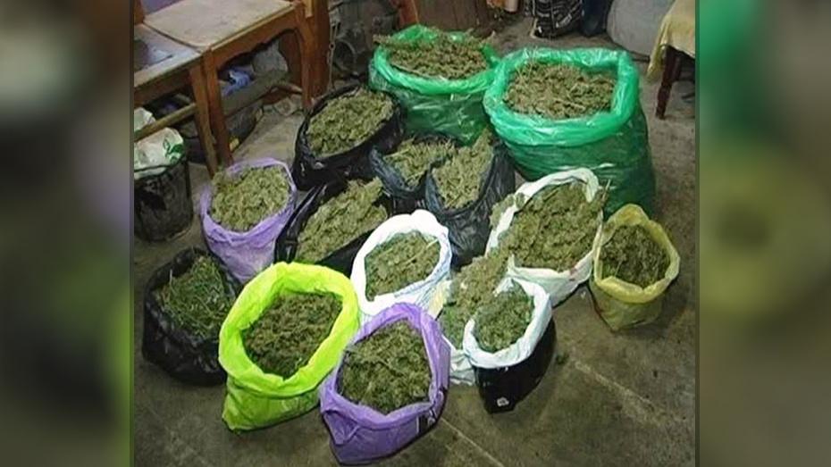 В Воронежской области на 18% увеличилось количество преступлений в сфере наркоторговли