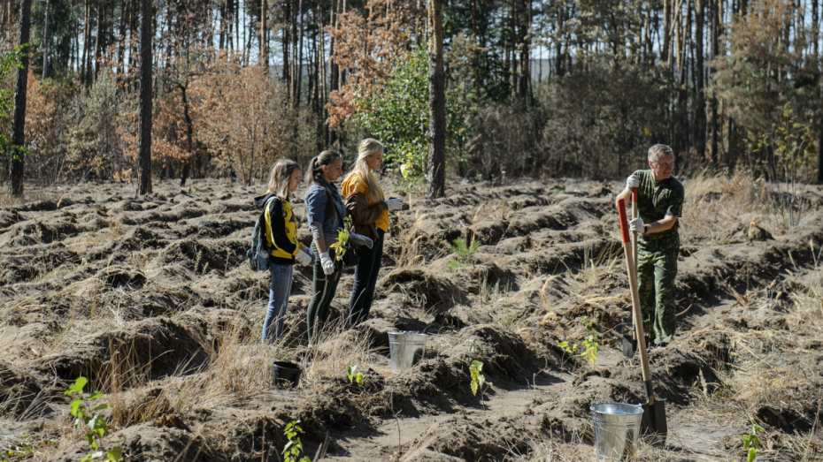 Более 4 млн деревьев за год посадят в Воронежской области
