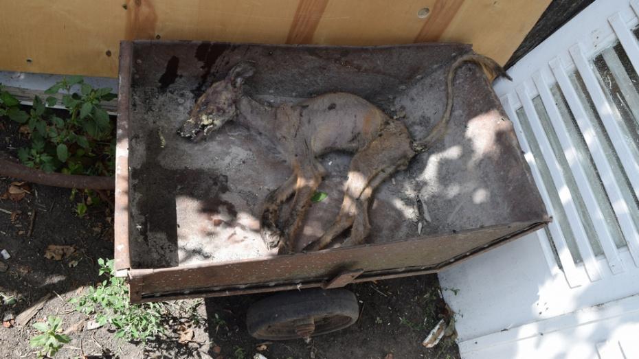 Под Воронежем чупакабра загрызла более десятка домашних птиц