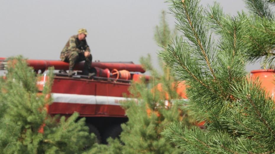 Воронежскому лесопожарному центру поставили 78 контрафактных бензопил на 2 млн рублей
