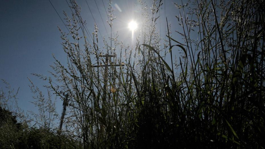 Гидрометцентр предупредил воронежцев об «опасном солнце»