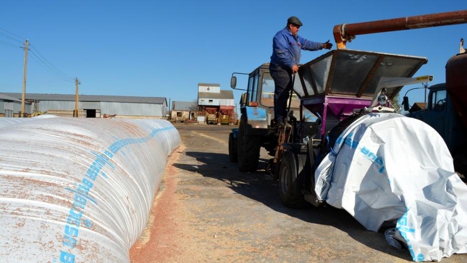 Нижнедевицкие аграрии освоили новую технологию хранения зерна
