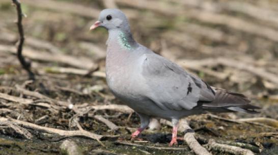 В Воронежском заповеднике заметили первых птиц, которые вернулись с зимовки