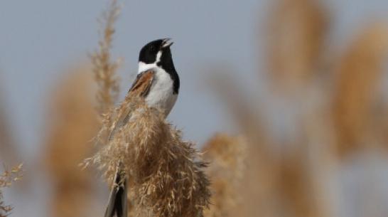 Воронежский заповедник опубликовал фотографии прилетевших птиц